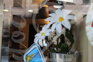 Margaritas en el escaparate de primavera de la agencia de viajes Celtic Viajes 4